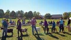 Fall Festival & Agricultural Fair