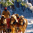 winter sleigh ride in morning