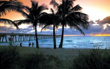 Palm Trees on Dania Beach