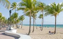 Palm Trees on Fort Lauderdale Beach