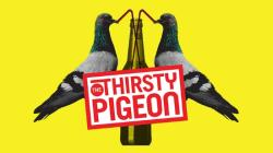 BCPS_Thirsty Pigeon