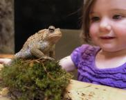 School break special open hours at the Hudson Highlands Nature Museum's Wildlife Education Center Wednesday, March 27 - Saturday, March 30 from 12 p.m.- 4 p.m. Photos by George Potanovic, jr.