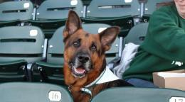 Dog Days at Lugnuts