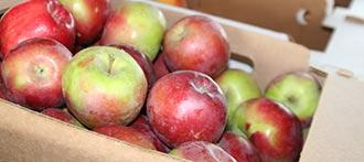 Farmers Markets Apples