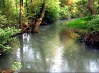 Green Spring Creek