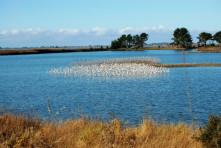 Arcata Marsh Slower-Speed Tour