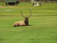 Play a Round of Golf With The Locals