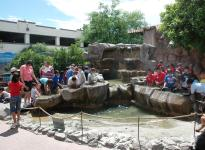 Panning for Gold at Arizona Museum of Natural History