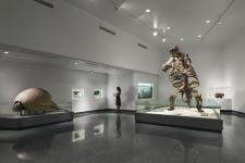 Ground Sloth at Museum of Arts & Sciences