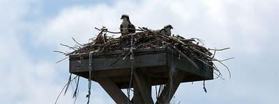 birding-birds-nest