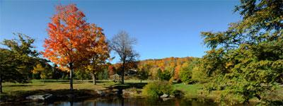 nature-centers-fall-trees