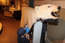 polar bears on display in Churchill, Manitoba