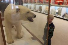 This bear is found at the Eskimo Museum