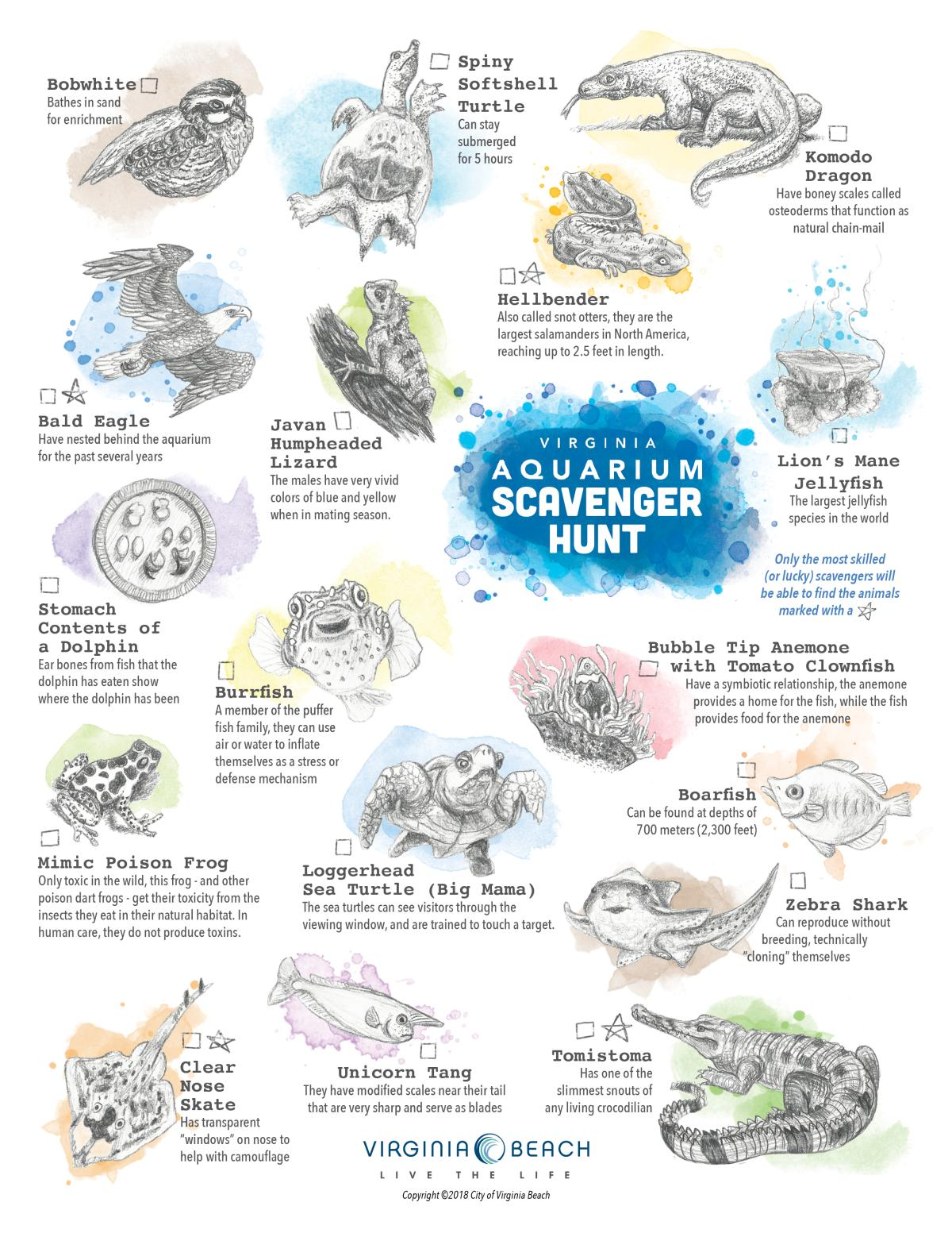 Virginia Aquarium Scavenger Hunt