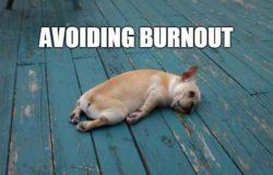 Avoiding Burnout-Tired Dog