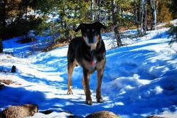 Dog Hike 5