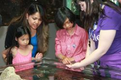 Experience Sea Life in the Pacific Northwest for Free at the MaST Center Touch Tank