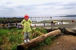 Top 5 Brown Bag Lunch Spots in Seattle Southside: Des Moines Beach Park