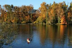 Fall Kayaking by Traci Williamson