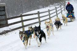 Dogsledding at Nemacolin