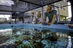 NSU coral lab