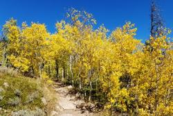 Fall Aspens in Cheyenne