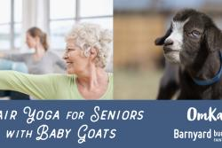 Chair Yoga with Baby Goats