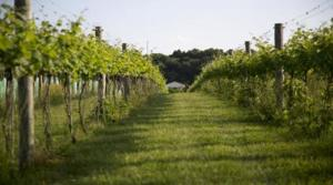 image-146043_5044_North Gate Vineyard 3.jpg-788.jpg