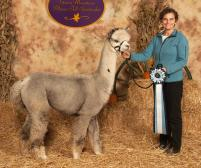 Leda Blumberg with Cloud's Gem Stone of Faraway Farm Alpacas in Yorktown Heights, NY