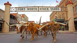HowdyUK Expedia The Fort Worth Herd Without Drover
