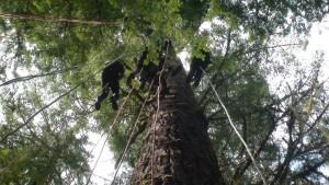 Pacific Tree Climbing Institute (9)