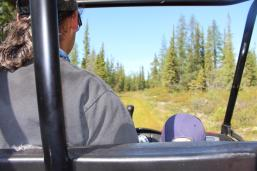 Taking a ride through the boreal forest