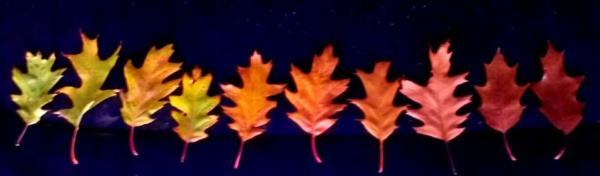 leaf collection fort wayne