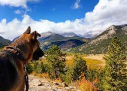 Dog Hike 3