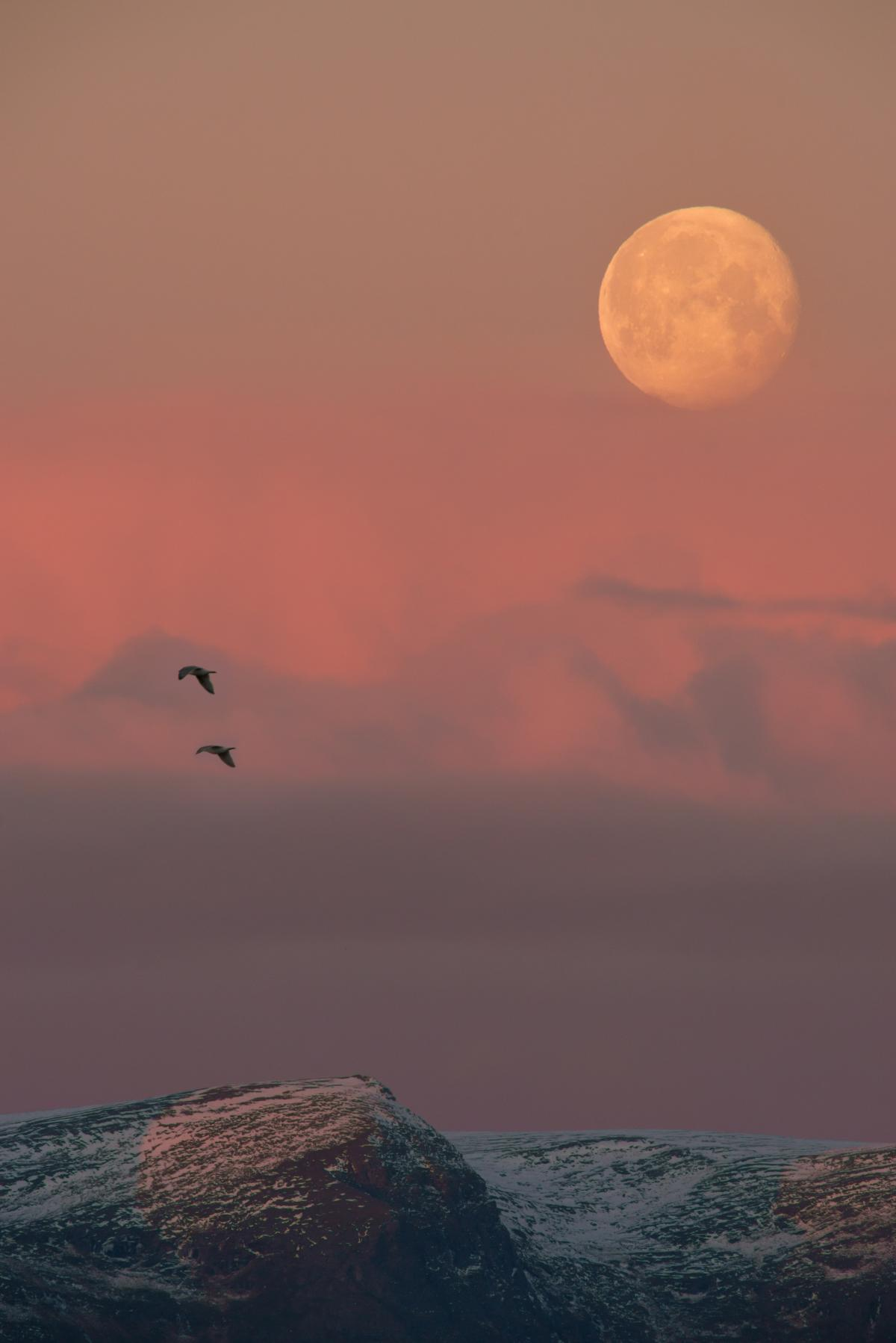 Birds flying in the dwindling light before the sun sets for the next few months in Hammerfest.