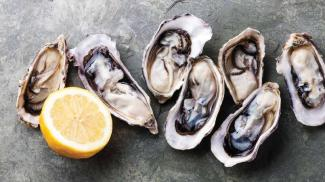Oyster Blog