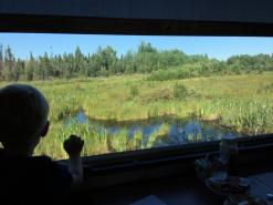 The boreal forest offers a different view