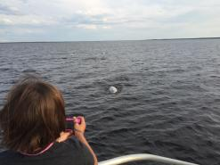 Lots of photo opps from these curious whales