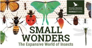 Swaner Small Wonders