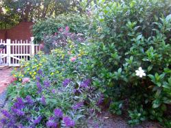 Piedmont Garden Tour