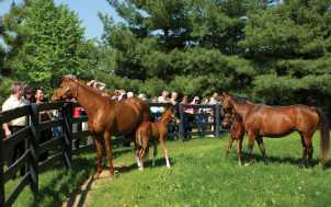 Horse Farm Tours; Lexington, KY
