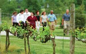 Equus Run Vineyards: Versailles, KY