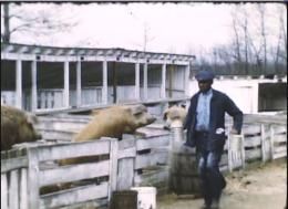 Workhouse History: Feeding the Hogs