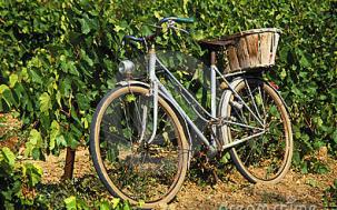 Bike Vineyards