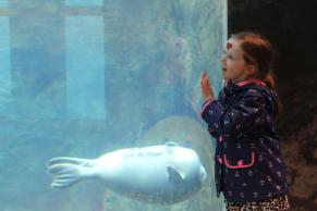 A smiling child presses their face against the glass as a seal swims by.