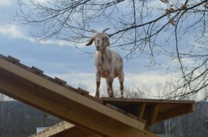 Temple Hall Farm Regional Park - Loudoun County, VA