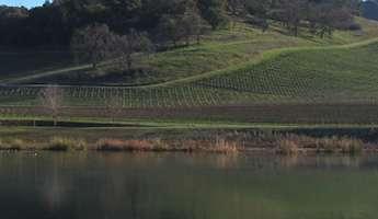 Vineyard Hike