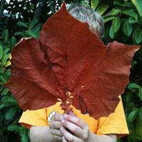 Large red fall leaf by Emily