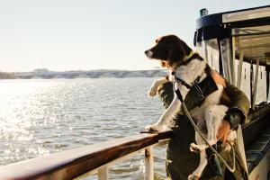canine cruise