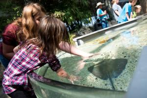 Tennessee Aquarium Stingray Bay